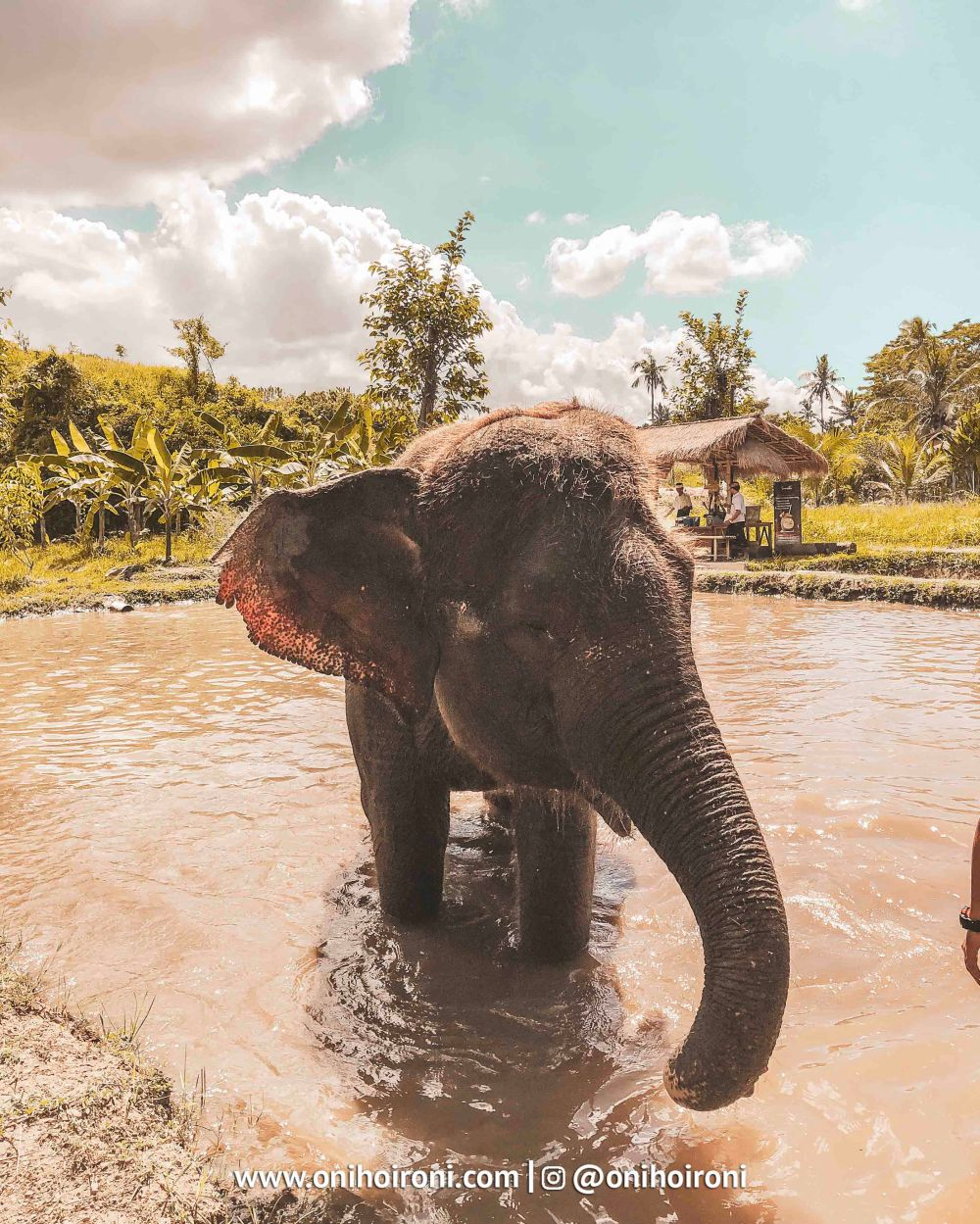 5 Bali Zoo Oni Hoironi Elephant mud fun