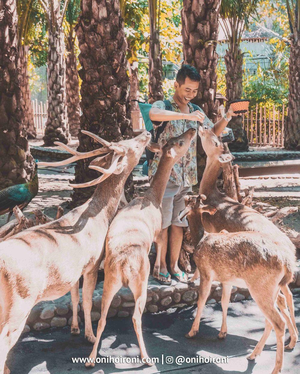 6 Bali Zoo Oni Hoironi Elephant mud fun