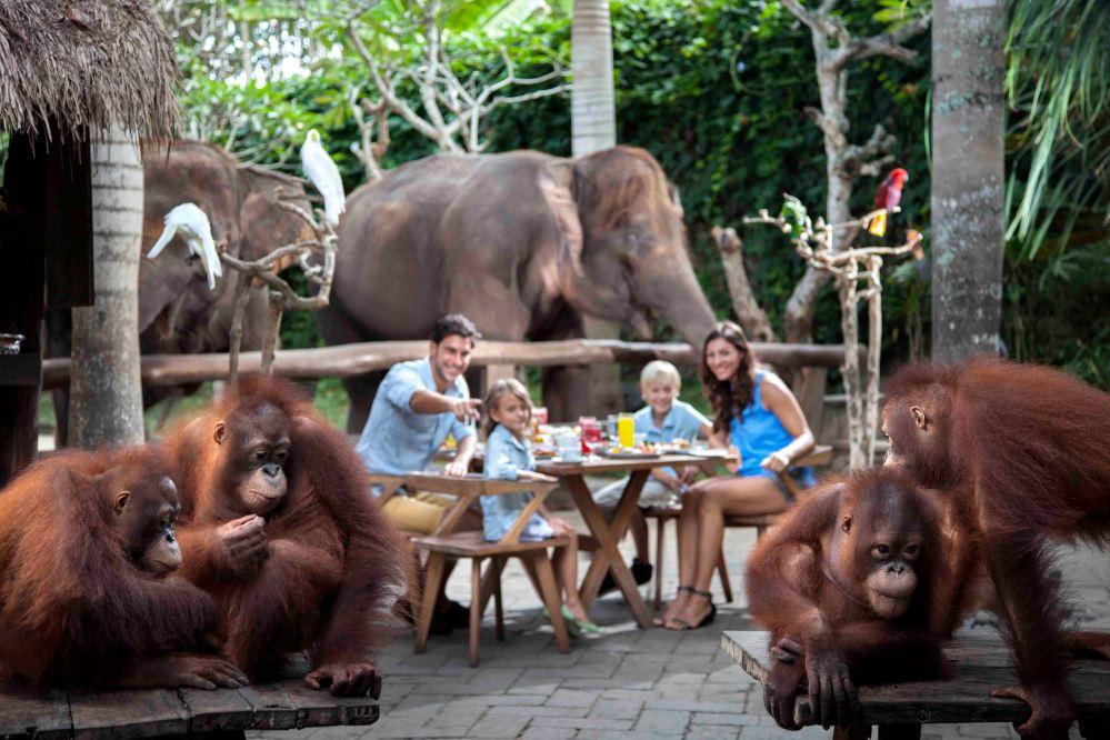 Breakfast with Orangutan (1) oni hoironi
