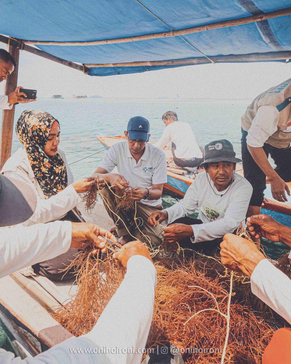 14 YBM PLN Rumput laut di kepulauan seribu oni hoironi
